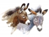 Watercolor Farm Animals Donkeys Couple Hand Drawn Illustration isolated on white background